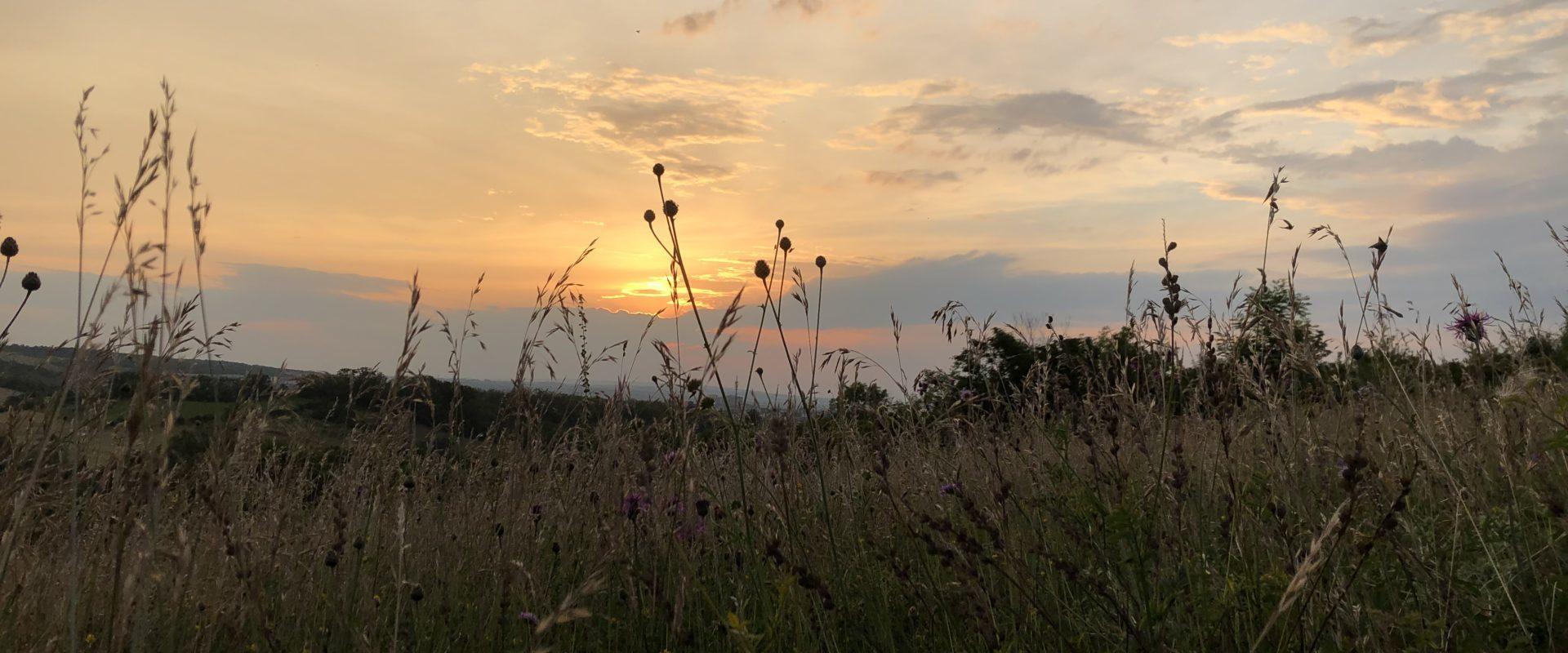 Sonnenuntergang überm Feld
